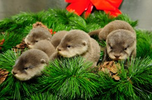otter_pups_christmas